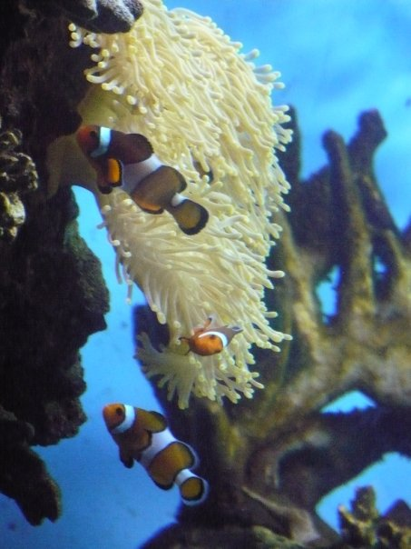 Nemo and Coral in Barcelona