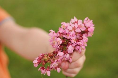 flower-667951_1280