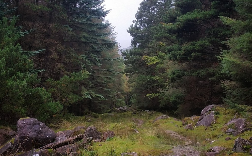 There's nothing quite like the mysteriousness of an Irish forest. The ground was muddy, the air was misty, and the branches seemed to suppress every sound. This was the first deeply forested section along the Kerry Way, towards the end of my run through the Black Valley. Photo: Sara Weaver, Sept. 2017.