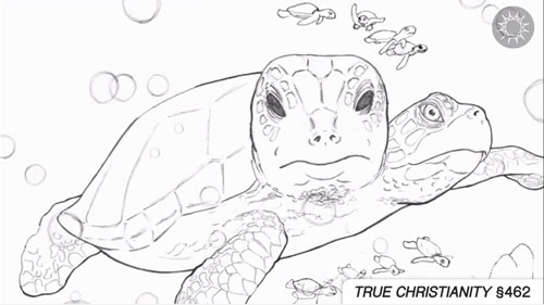 recap_turtles