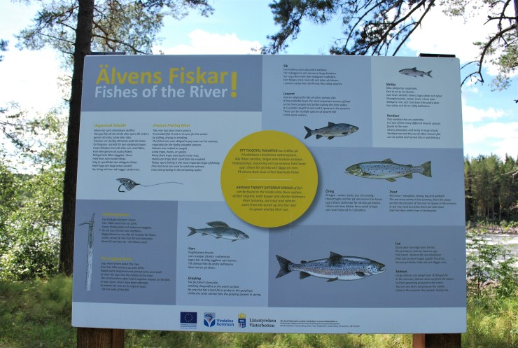 Vindeln River fish ID board by sweden fishing and birding.