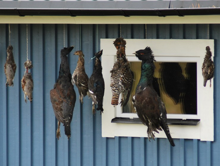 Northern Sweden in October. Photo by sweden fishing and birding.