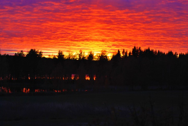 Fire in the sky - wild sweden
