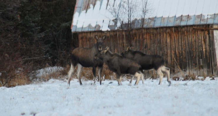 Guided wildlife watching trip in Sweden