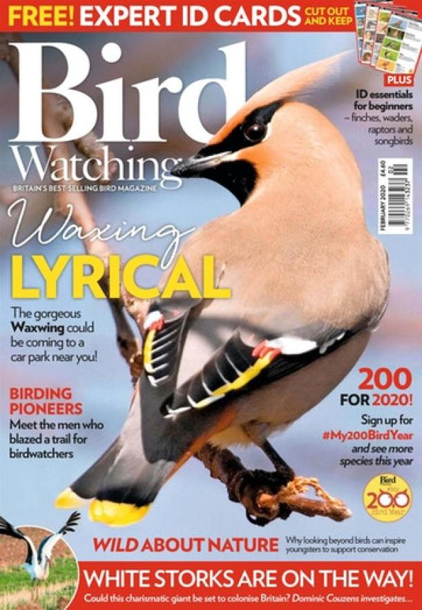 sweden fishing and birding work with Bird Watching magazine.