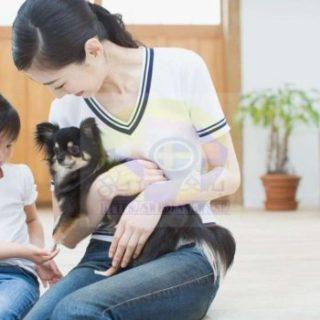 تحذير من أمراض خطيرة تنتقل للإنسان من حيوانات أليفة