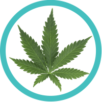 cannabis indica strain facts