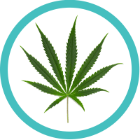 sativa cannabis leaf