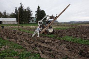 2015: Hop yard expansion