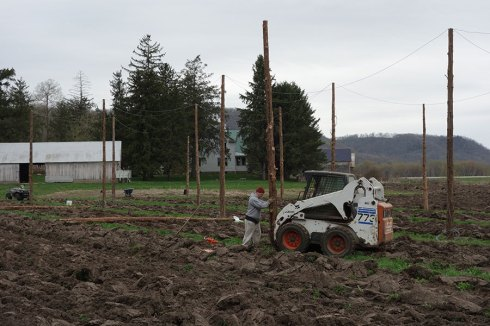 2015: Hop yard expansion