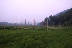 The Hop Yard