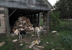 Woodshed staging area