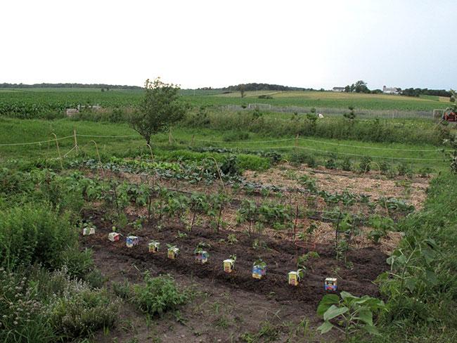 Spring garden, 2010