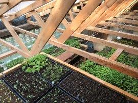 Full Greenhouse