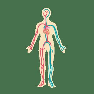 動脈血栓塞栓症と静脈血栓塞栓症