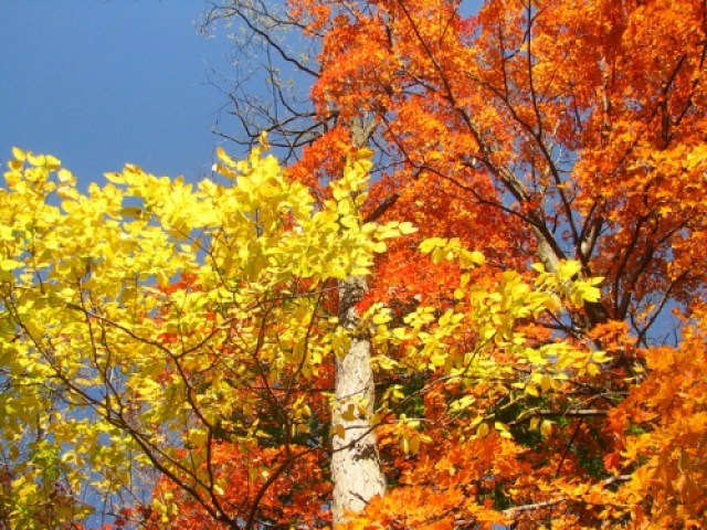 Things to Look Forward to About Autumn - Sweet and Savoring