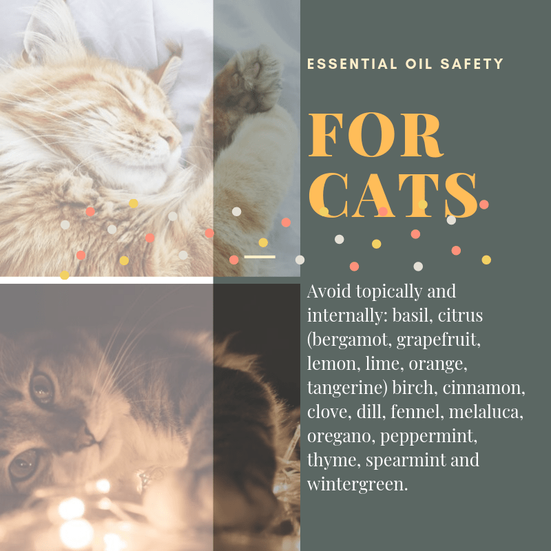 Essential Oil Safety for Cats
