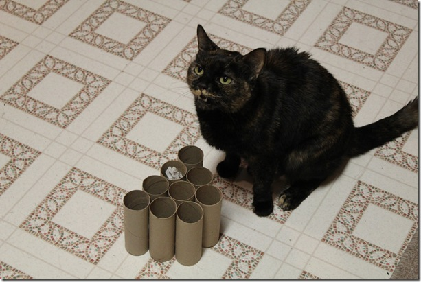 Toilet Paper Project (3/4)
