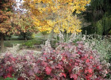 Fall colors in the garden