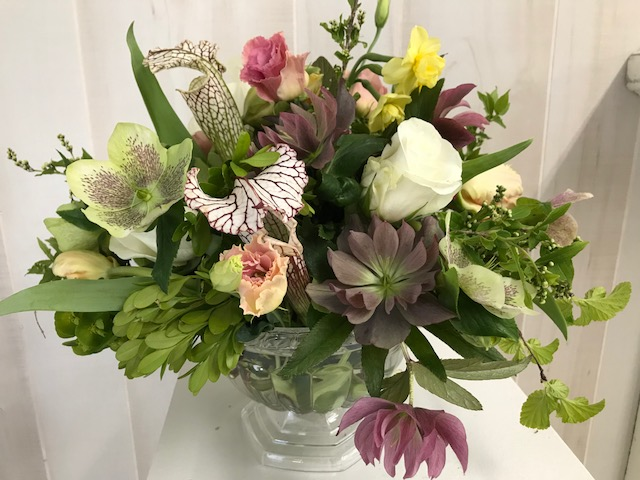 Hellebores and pitcher plants