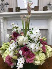 The delicate white pearl bush with pitcher plant and 'Mojito' hydrangeas