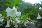 Flowers in Bhutan