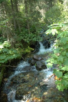 Soft Stream in the Forest