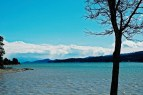 Flathead Lake with Tree