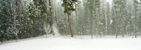 Snow, Forest, Home