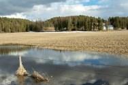 Pond, Beaver Lake Road