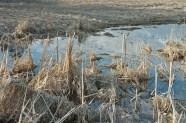 Pond Melt