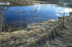 Pond with Light Prism
