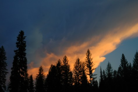 Sunset Clouds over Tall Trees