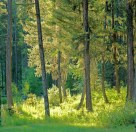 Summer Forest with Soft Light copy