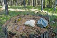 Three Stones on Stump
