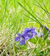 Tiny Purple Flowers, May