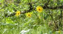 Yellow-Flowers-in-Spring-1038x576