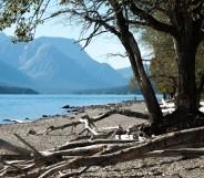 Waterton Lake with Driftwood