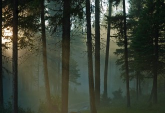 Forest Mood