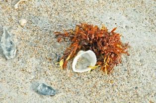 Shell, Sand, Amelia Island