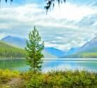 Bowman Lake, Fall, Small Tree, Mountains