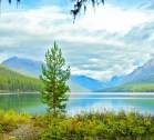 Bowman Lake, Fall, Small Tree, Mountains