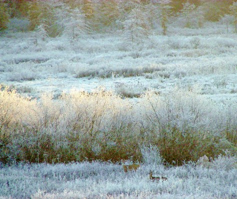 Deer in the Frost, Farm