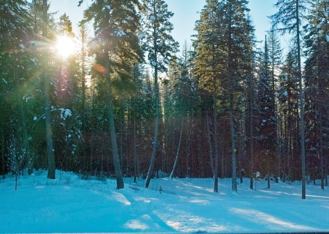 Sunrise, Christmas Morning, Tall Trees, Snow