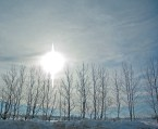 Sun, White Prism, Bare Trees, Winter, Sky as Smart Object-1
