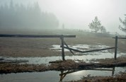 Spring, Puddle, Fence, Fog