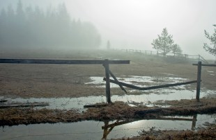 Spring, Puddle, Fence, Fog