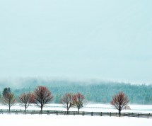 Fence, Trees, New Buds, Snow, Fog, Last Days of Winter as Smart Object-1
