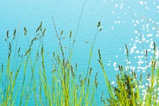 Flathead Lake, Water Sparkles, River Grass