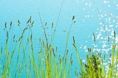 Flathead Lake, Water Sparkles, River Grass